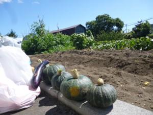 たくさん収穫しました☀